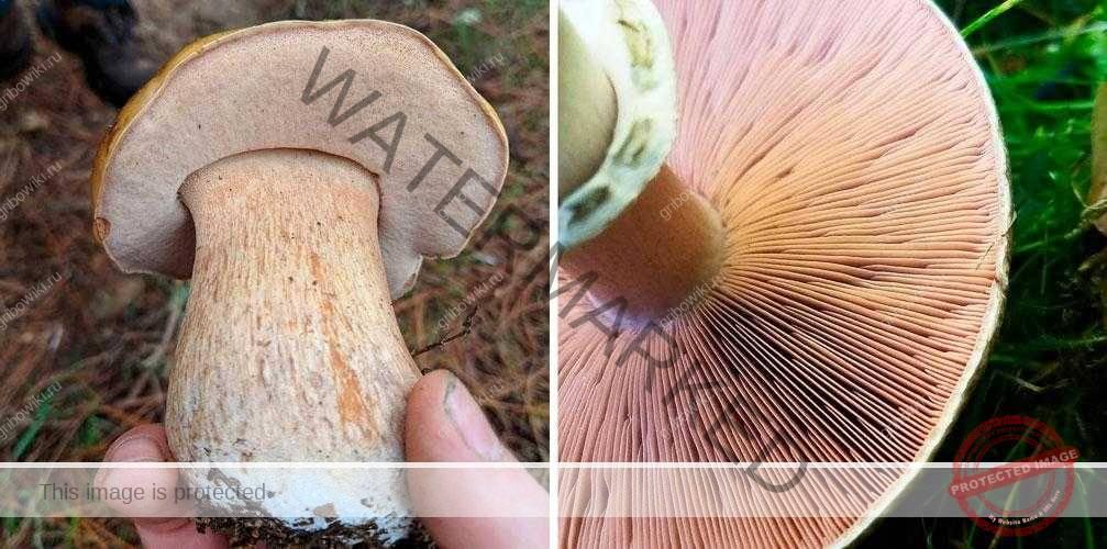 Классификация грибов по типу питания