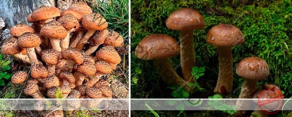 Все ли коричневые грибы вы знаете?