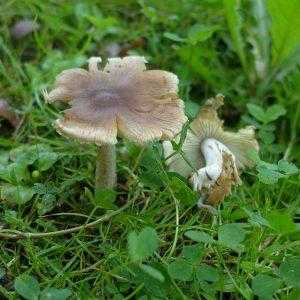 Что следует сделать при отравлении ядовитыми грибами