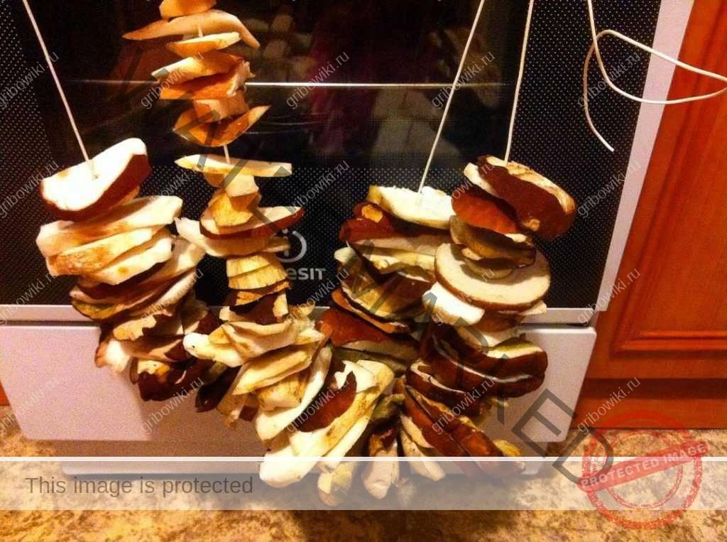 Все о сушке грибов. В духовке, на нитке, в электросушилке. Советы и инструкции