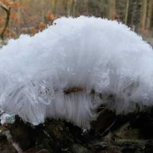 Ледяные волосы